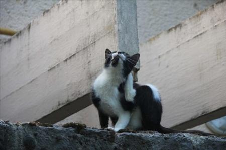 Hilfe, meine Katze hat Flöhe!