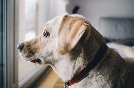 Toxoplasmose bei Hunden